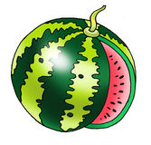 Water-melon berry pumpkin fruit stalk. Drawing melon field agriculture Royalty Free Stock Photos