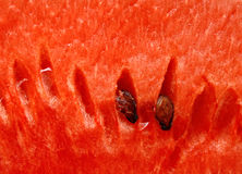 Water-melon close up background Stock Photography