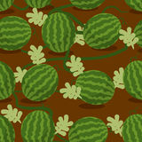 Water-melon plantation seamless pattern. Royalty Free Stock Images