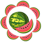 Water-melon segment Stock Photos