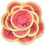 Water-melon, segments a flower Stock Images