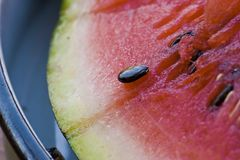 Water-melone Stock Image