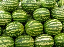 Water melons. A lot of water melons Stock Image