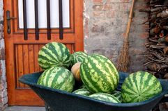 Water melons Royalty Free Stock Photography
