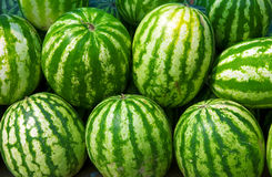 Water-melons royalty free stock image