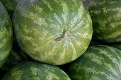 Water melons background Stock Images