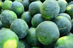 Water melons Stock Images