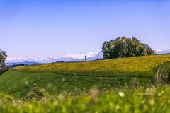 Water Mill, Yellow Flower Field and Snowy Peaks on Sunny Spring. Day Stock Photos