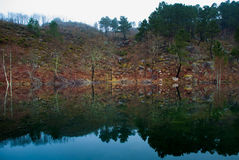 Water mirror with foliage and trees Royalty Free Stock Images
