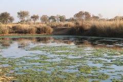Water, moeras en van het land mening Royalty-vrije Stock Foto's