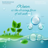 Water molecule. Water is the driving force of all nature. The illustration of bio infographics with water molecule in transparent style. Ecology and biochemistry Stock Photos