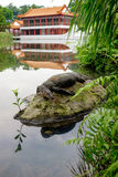 Water monitor lizard (varan) is restin on the stone in the pond. In the chinese garden Royalty Free Stock Images