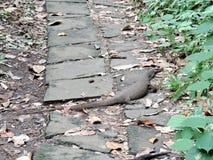 Water Monitor Lizard Varanus Salvator Royalty Free Stock Photos