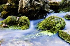 Water and moss Royalty Free Stock Photo