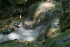Water in motion. Springs in the forest Royalty Free Stock Photo