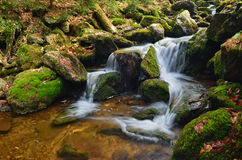Water from mountains. Roaring stream scrambling among the rocks and trees Royalty Free Stock Photo