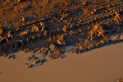 Water and Mud Stock Photos
