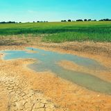 Water and mud at dry cracked clay in corner of wheat field. Dusty ground. Stock Images