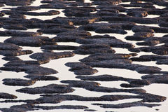 Water And Mud Sunlit Background Pattern Stock Photography