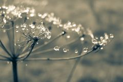 Water, Nature, Dew, Macro Photography Stock Photography