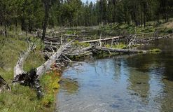 Water, Nature Reserve, Wilderness, Wetland royalty free stock photos