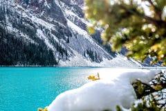 Water, Nature, Tree, Winter stock photo