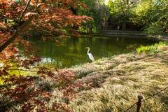 Water, Nature, Vegetation, Leaf stock photos