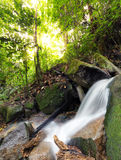 Water in nature. Waterfall stream in forest Stock Images