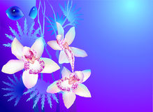 Water nymph and orchids. On blue background royalty free illustration