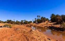 Water in the oasis, Sahara desert Stock Photos