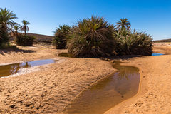 Water in the oasis, Sahara desert royalty free stock photography