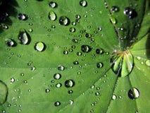 Water op blad Royalty-vrije Stock Foto's