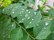 Water op de bladeren stock fotografie