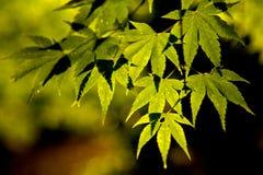 Water op de bladeren in de ochtend Royalty-vrije Stock Foto
