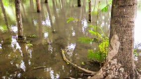 Water op de regenwoudvloer stock footage