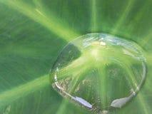 Water op het blad in mijn binnenplaats Royalty-vrije Stock Afbeeldingen