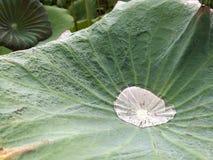 Water op het lotusbloemblad Stock Fotografie