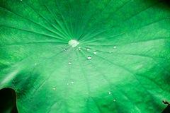 Water op lotusbloemblad stock fotografie