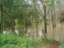 Water overstroomd dorp in het district van nakhonsi thammarat Stock Afbeelding