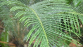 Water On Palm Frond stock video footage