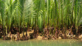 Water palm Stock Photography
