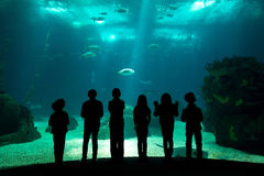 Water park. Children in a water park looking at fish through the glass Stock Image