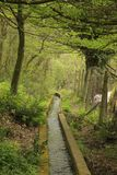 The water path in wood Royalty Free Stock Images