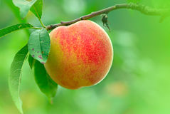 Water peaches with nice backgrund Royalty Free Stock Photos
