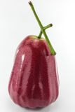 Water pink guava Stock Images