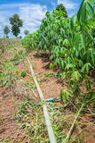 Water pipe irrigation system for cassava farm Stock Images