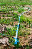 Water pipe supply garden farm strawberries berries in field Stock Photos