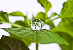 Water Plant Stock Image