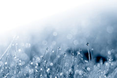 Water and plant Royalty Free Stock Images