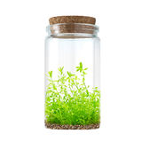 Water plant in bottle Royalty Free Stock Image